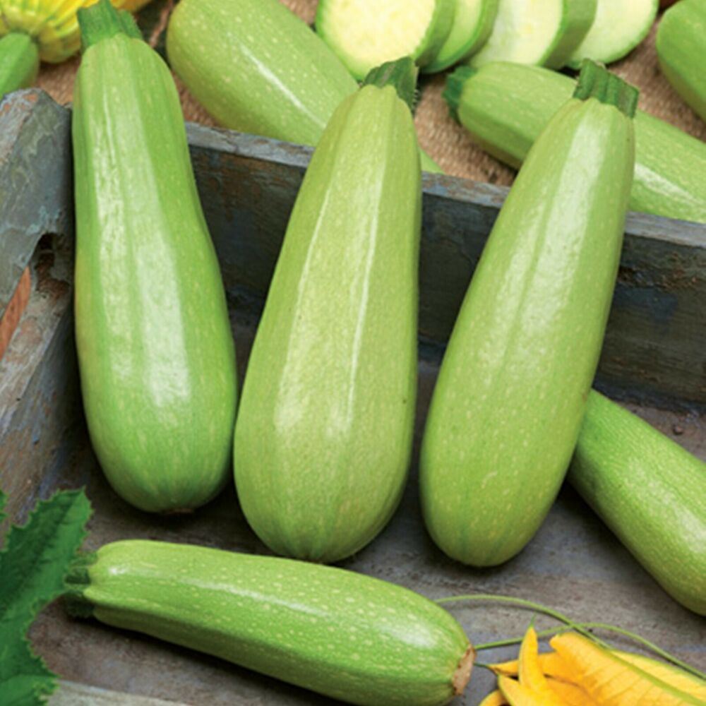 seeds summer squash zucchini chaklun organic heirloom. Black Bedroom Furniture Sets. Home Design Ideas
