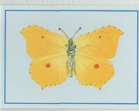 #35 Brimstone Butterfly Collector Card