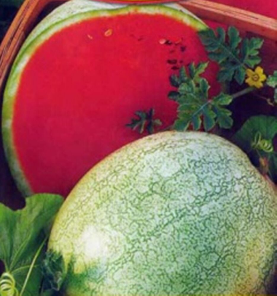 watermelon seeds You searched for: watermelon seeds etsy is the home to thousands of handmade, vintage, and one-of-a-kind products and gifts related to your search no matter what you're looking for or where you are in the world, our global marketplace of sellers can help you find unique and affordable options.