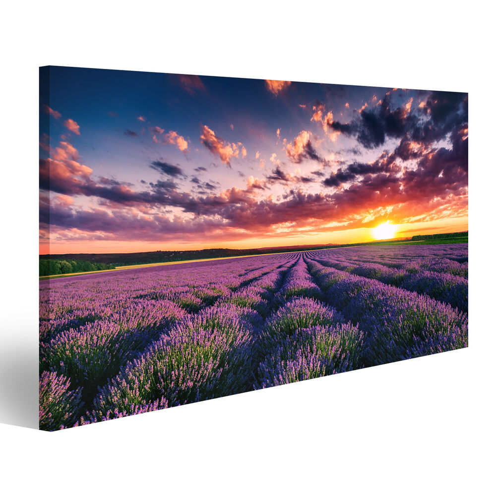lavendelfeld provence lavendel bild auf leinwand poster. Black Bedroom Furniture Sets. Home Design Ideas