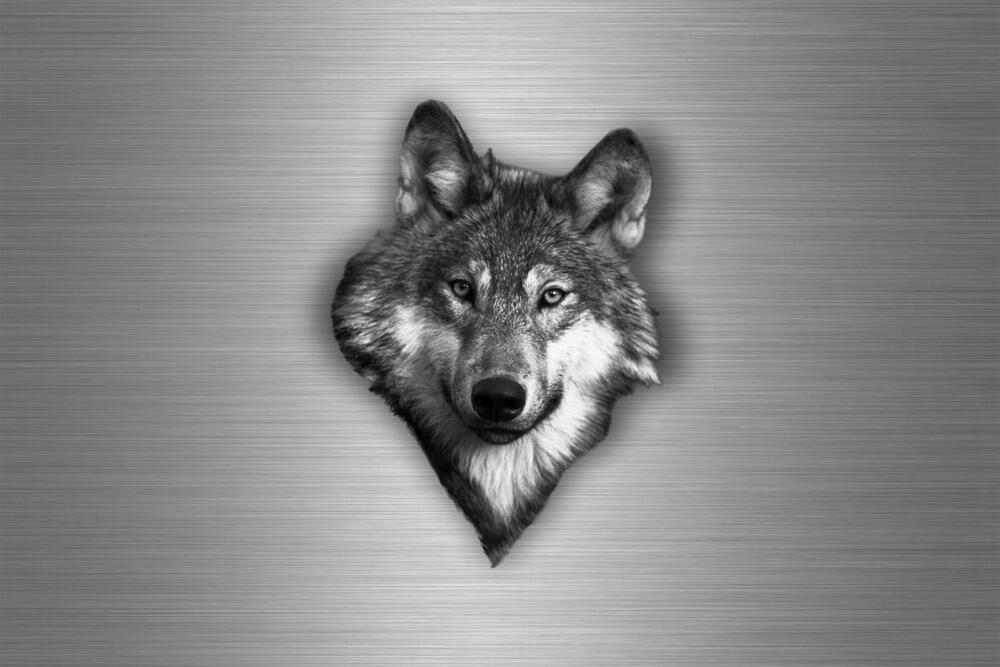 aufkleber auto sticker tuning motorrad wolf lupo lobo loup wolfshund kopf r2 ebay. Black Bedroom Furniture Sets. Home Design Ideas
