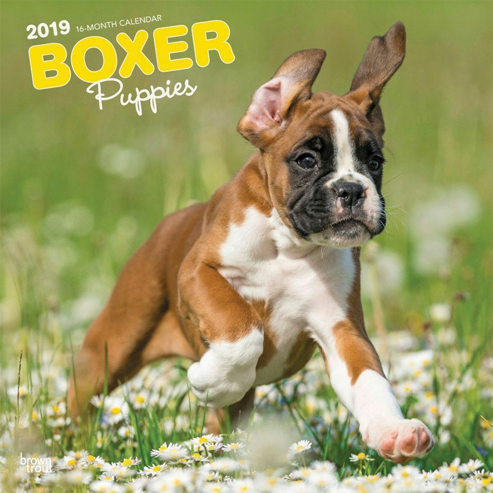 2019 Boxer Puppies Wall Calendar Boxer By Browntrout 9781975400620