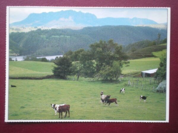 POSTCARD OCEANIA AUSTRALASIA NEAR SHEFFIED WITH MOUNT ROLAND IN THE BACKGROUND