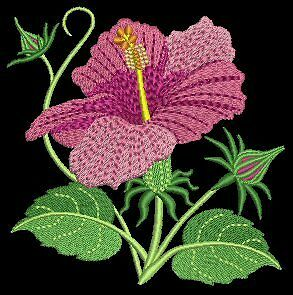 Applique Embroidery Floral Designs