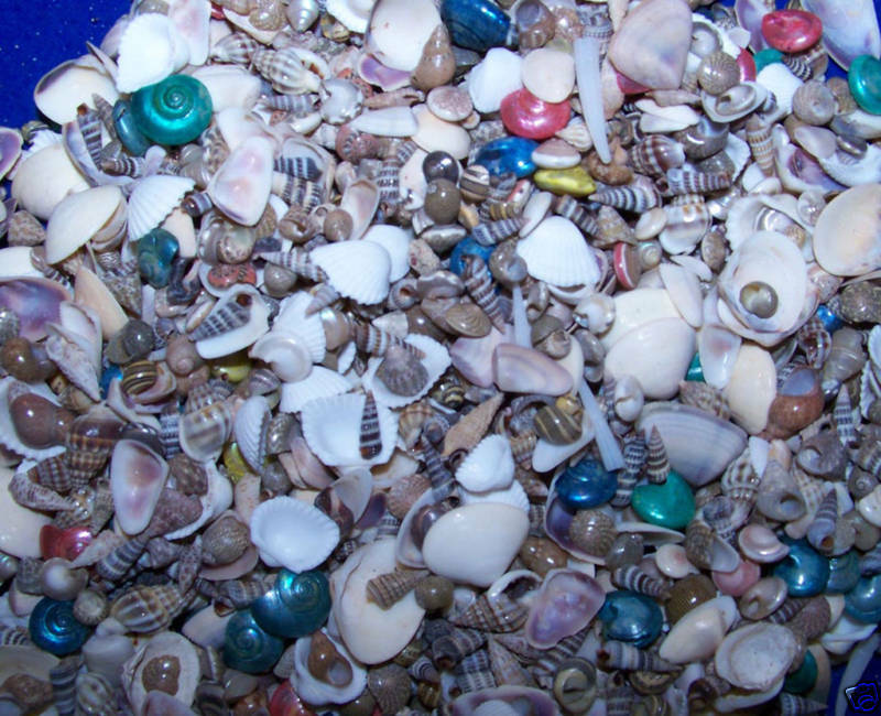bulk bag of tiny mixed crafts seashells weddings wow item