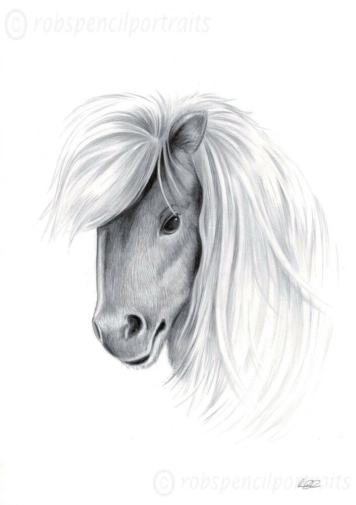 shetland pony limited edition equine art drawing print only 100 made