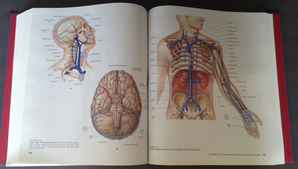 Human Anatomy Hardcover 2nd Edition Martini Hard To Find Book In New
