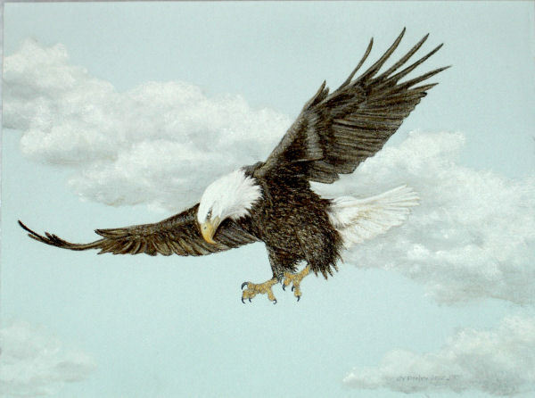Original Pastel Drawing American Bald Eagle Flying Sally ...