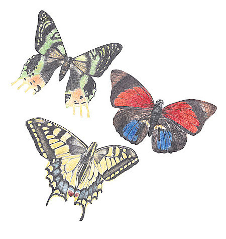 Butterfly 25 butterflies wallies 3 designs colorful for Butterfly design on wall