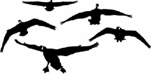 Honkers front goose decal goose sticker goose hunting for Duck hunting mural