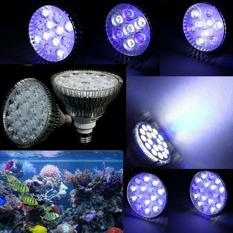 Fish Aquarium Light Bulbs Lightbulb Fish Tank 2017 Fish Tank Maintenance