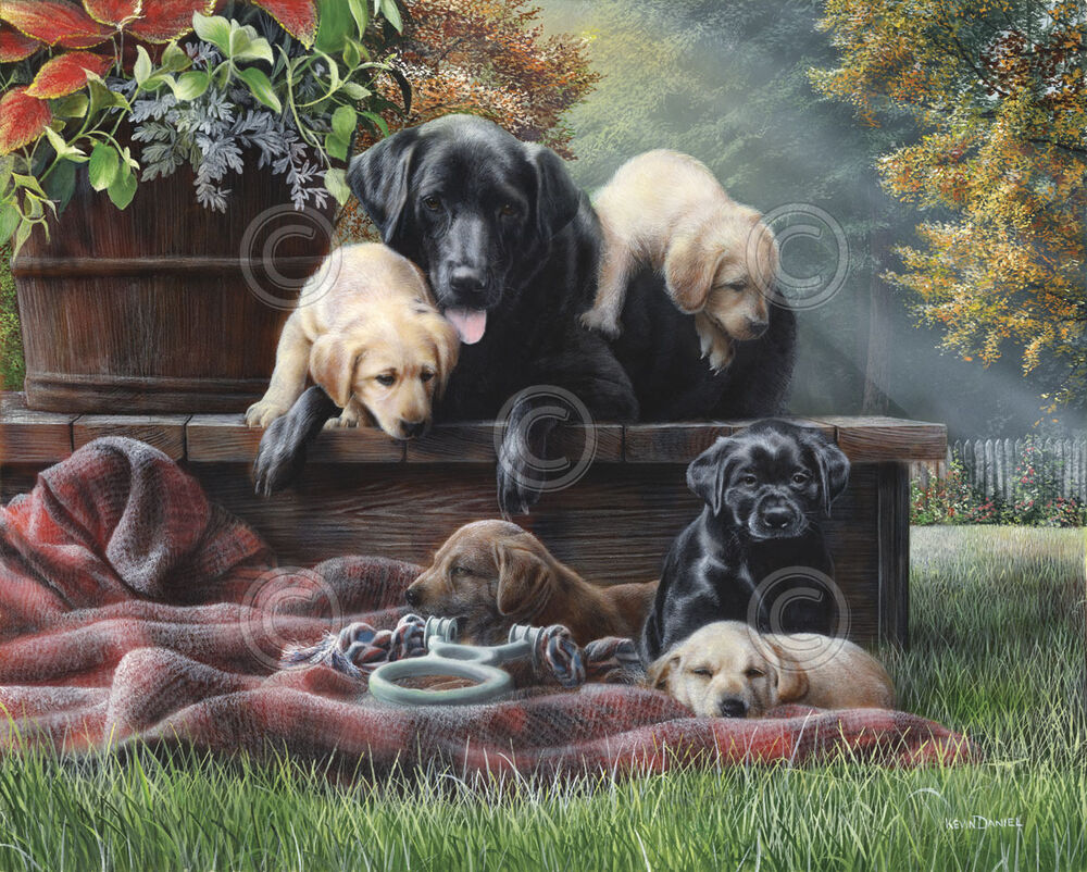 Dog art print cozy moments by kevin daniel lab labrador for Dog painting artist