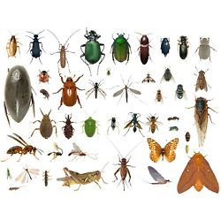 Kyпить 35+ Dead Bugs Entomology Class Insect Bug Collection IDENTIFIED! USA In Alcohol на еВаy.соm