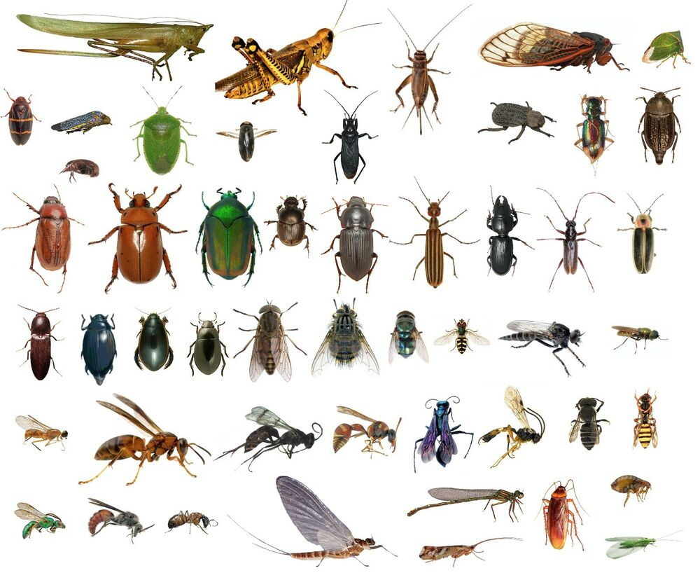 the class insecta Insects habit and habitat 15 coleoptera (beetles and weevils) is the largest order in the class insecta they feed on a wide variety of diets.