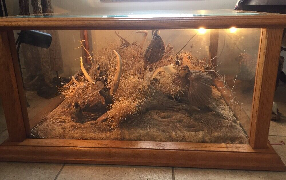 Vtg Taxidermy Coffee Table Man Cave Hunting Cabin Lodge