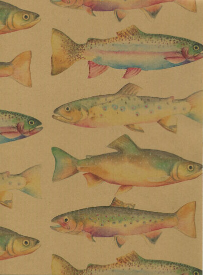 trout fish gift wrapping paper large 26 in x 30 ft roll
