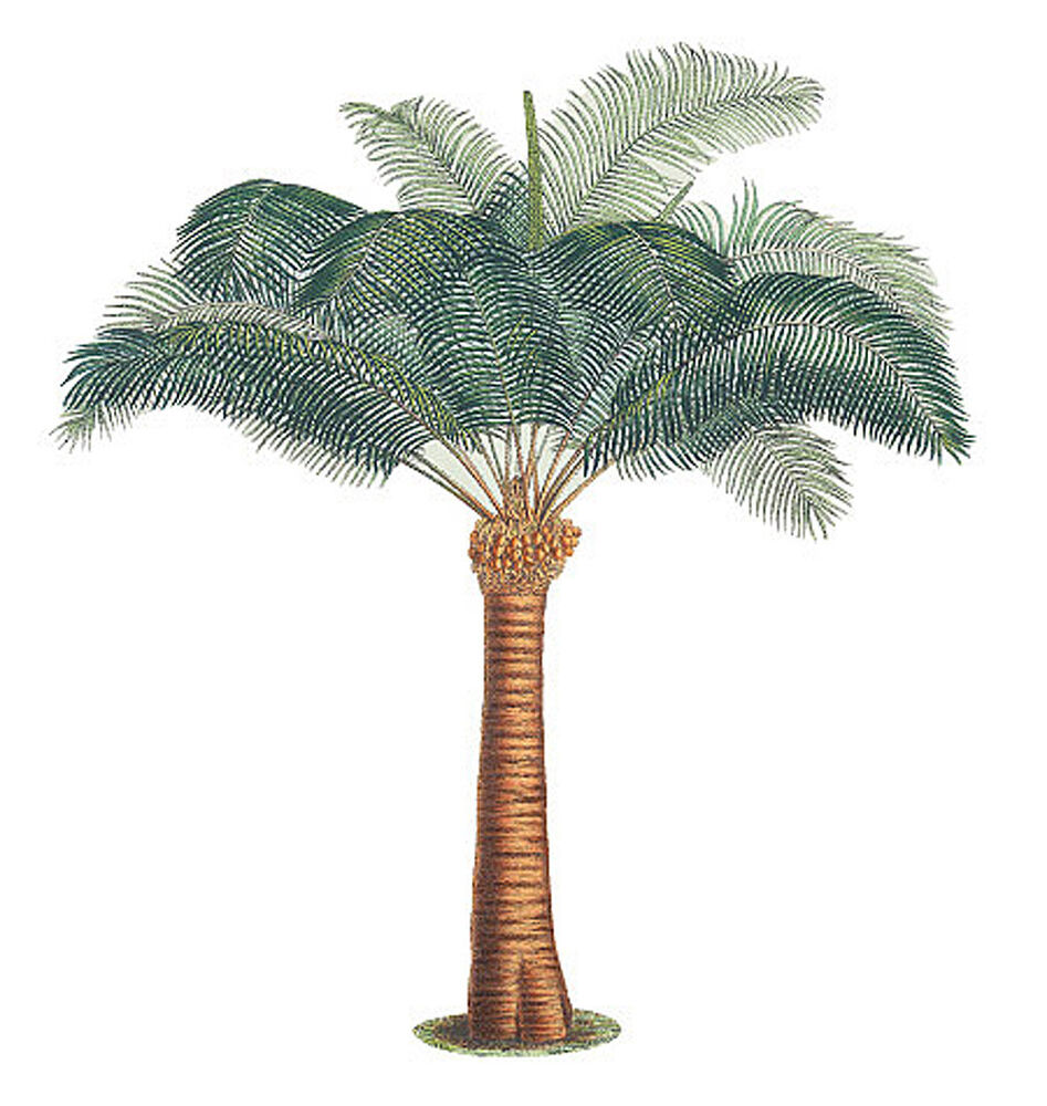 3 large palm trees wall murals wallies jungle coconut palm