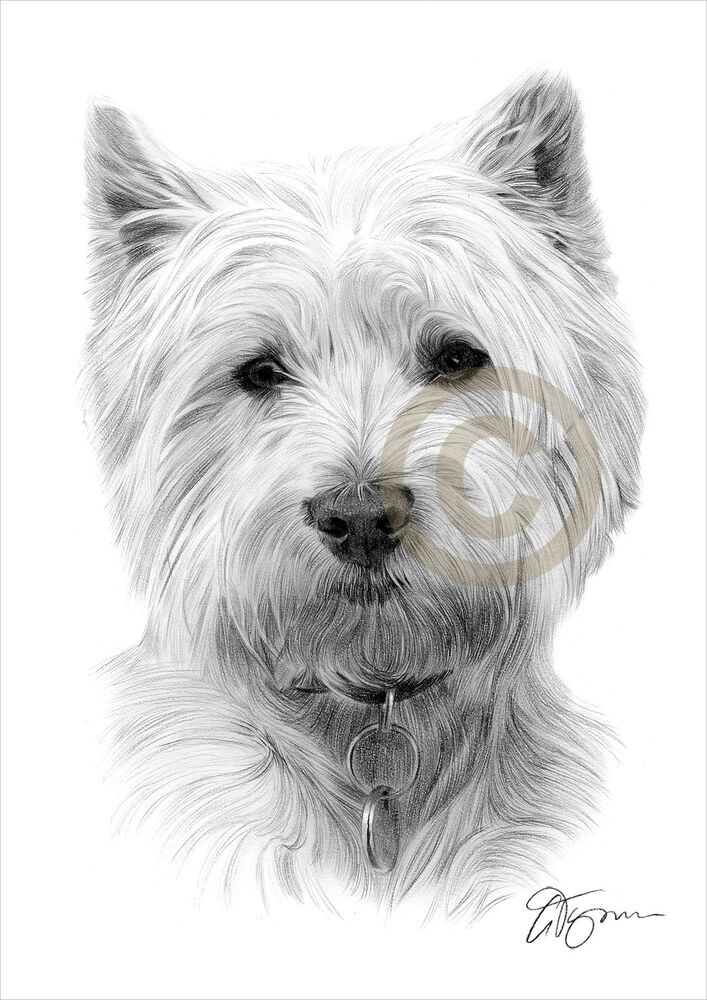 West highland white terrier art pencil drawing print for Westie coloring pages