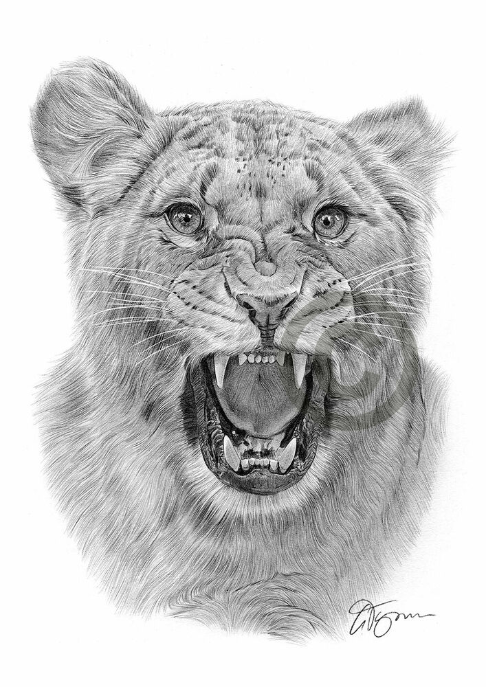 ANGRY LIONESS Pencil /...