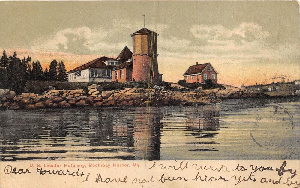 U s lobster hatchery boothbay harbor maine postcard 1906 for Fish farms near me