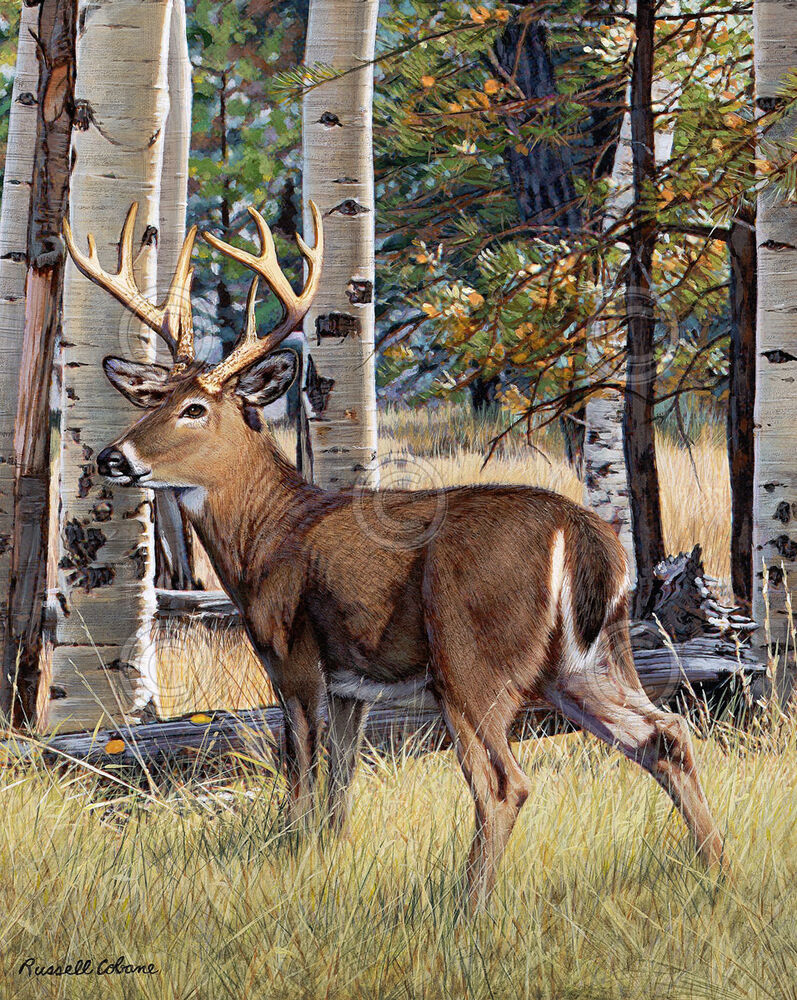 fall whitetail by russell cobane art print poster