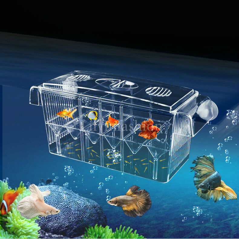 Fish breeding aquarium box tank isolation incubator for Fish breeding tank