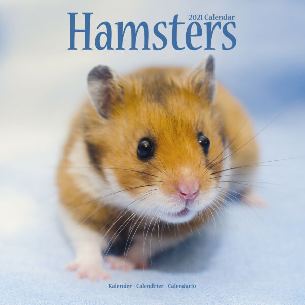 Royaume-UniHamsters 2021 Calendrier 15% OFF Multi s