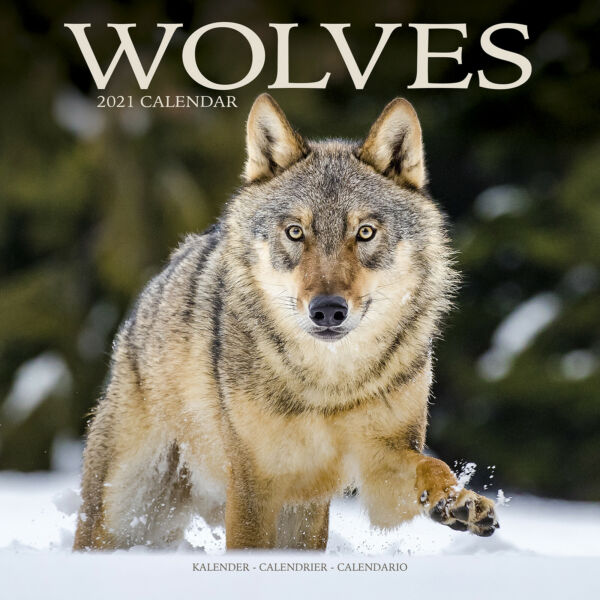 Royaume-UniLoups 2021 Wolf Calendrier 15% OFF Multi s