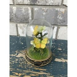Cloudless Giant Sulphuric  Butterfly Flowers In Plastic Cloche