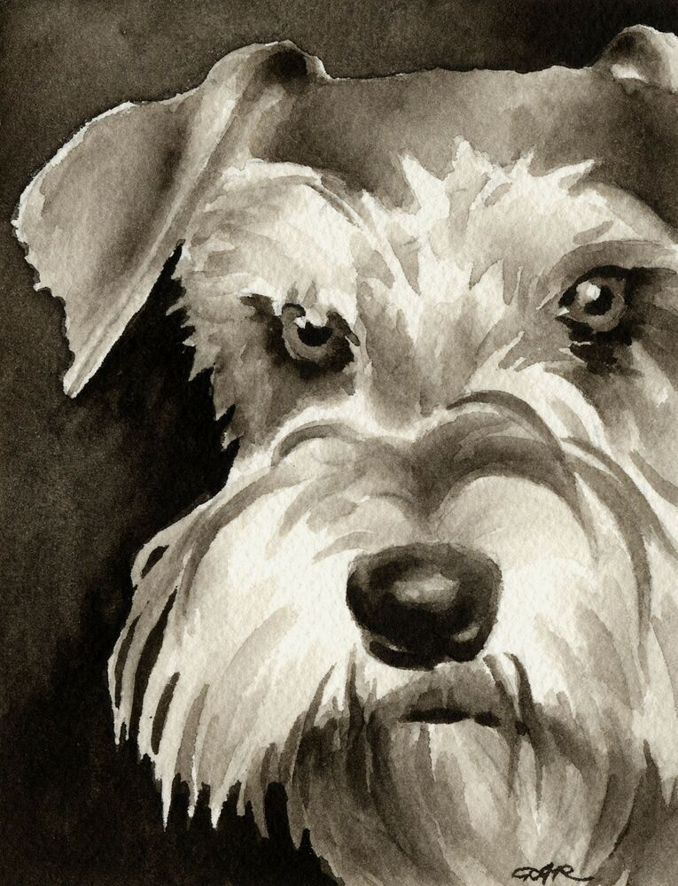 Miniature schnauzer dog watercolor art print signed by for Dog painting artist