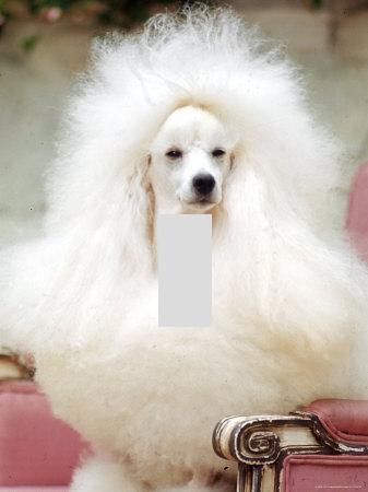 Big White Poodle Home Decor Light Switch Plate Cover Ebay