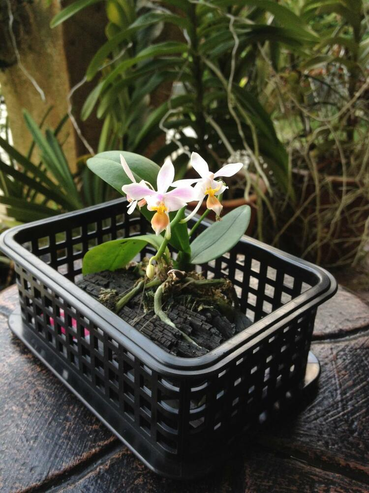 ** High Quality Decorative Pot for Phalaenopsis Cattelya ...