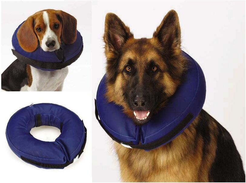 Where To Buy Inflatable Dog Collars For Dogs