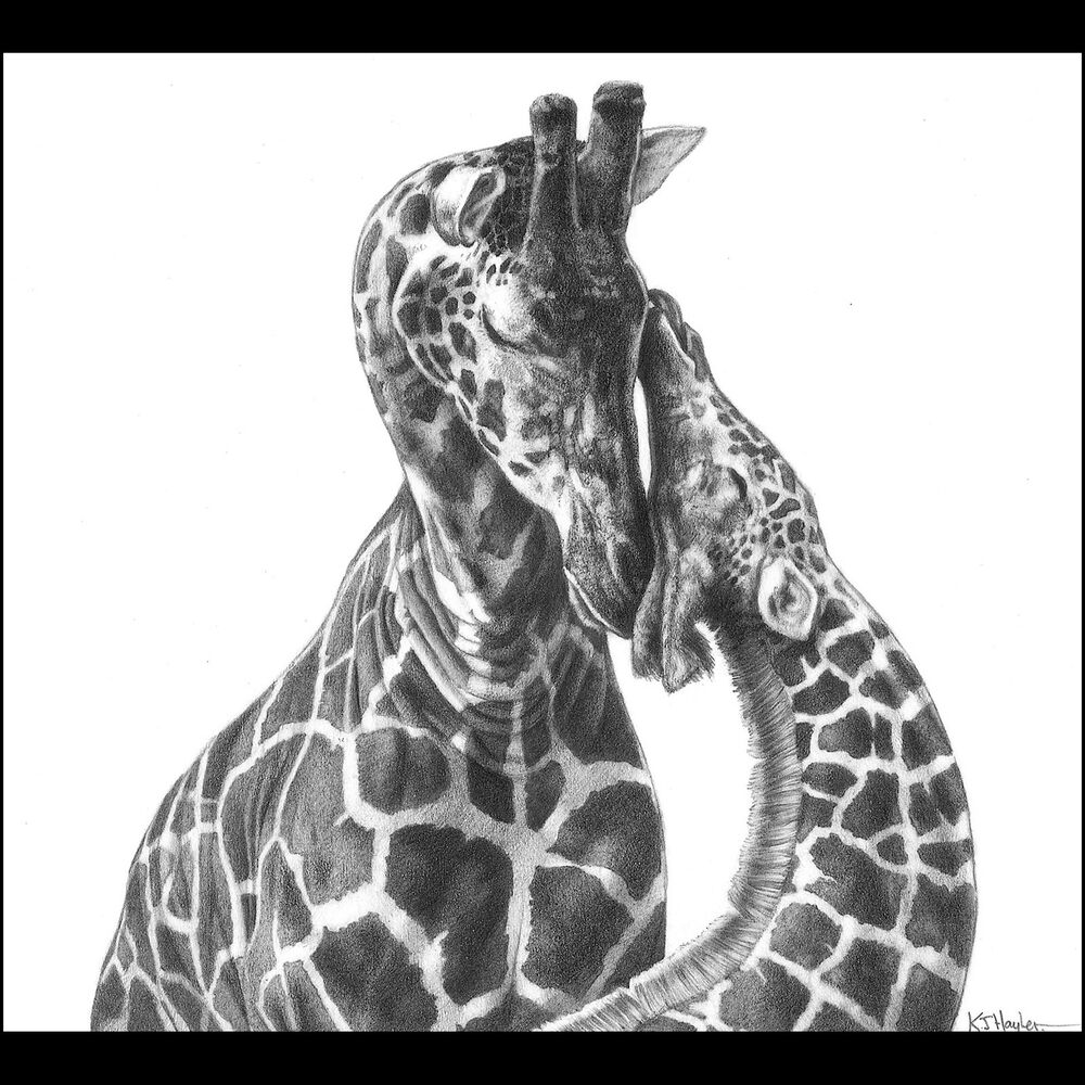Wildlife Animal Signed Art Print Picture Pencil Drawing ...