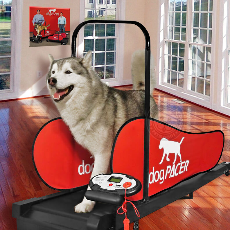 Dogpacer Dog Treadmill Folds Portable Small Med Large Dogs