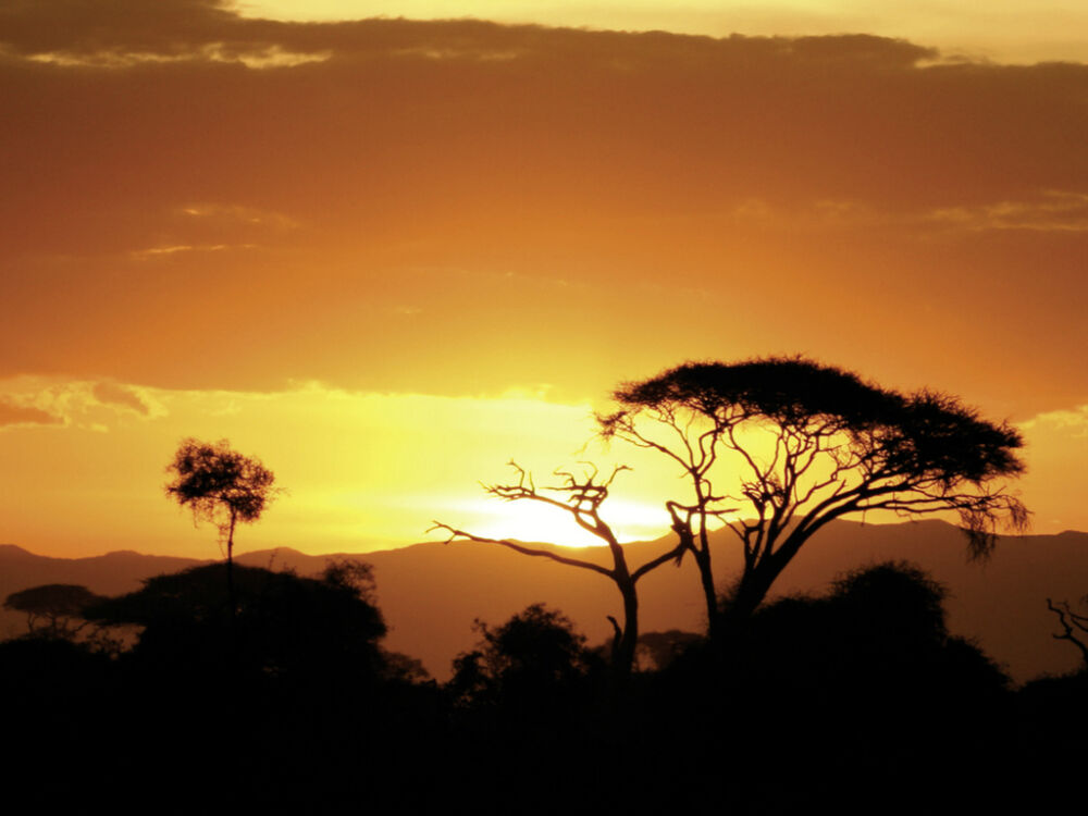 African sunset design safari scene poster wall art home for African sunset wall mural