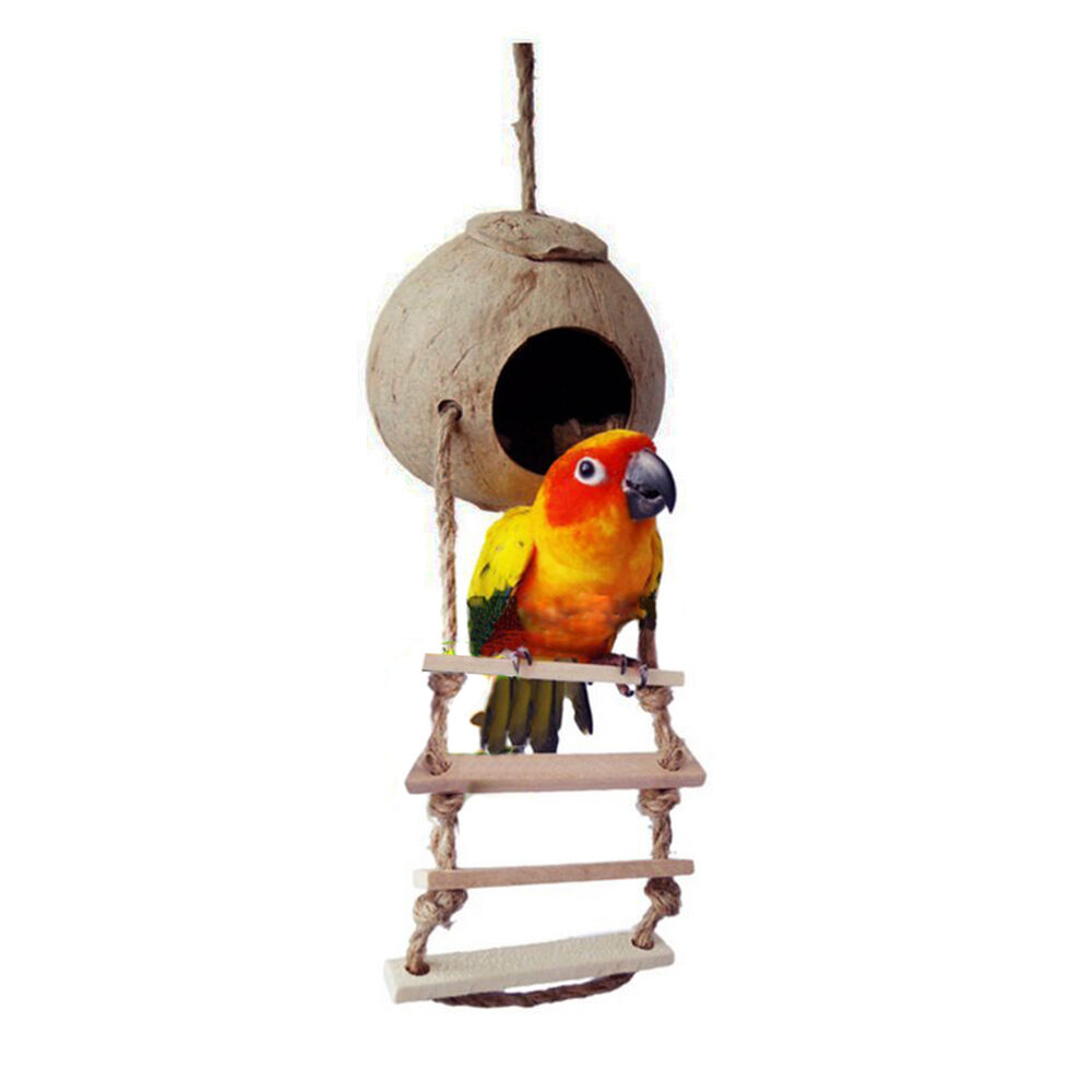 Small Toy Parrots : Small pet parrot bird naturals coco hideaway with ladder