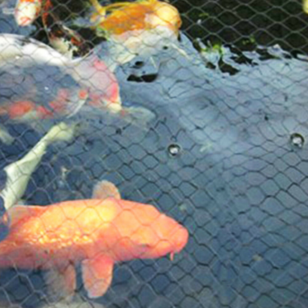 Pond cover net garden koi fish pond pool netting fox heron for Koi fish net