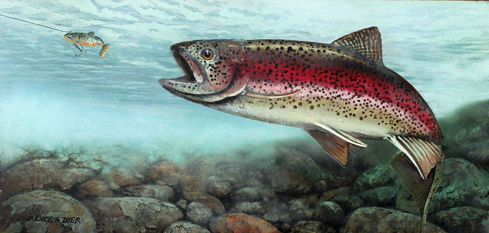 Rainbow steelhead trout painting washington state fish fly for Trout fishing in washington