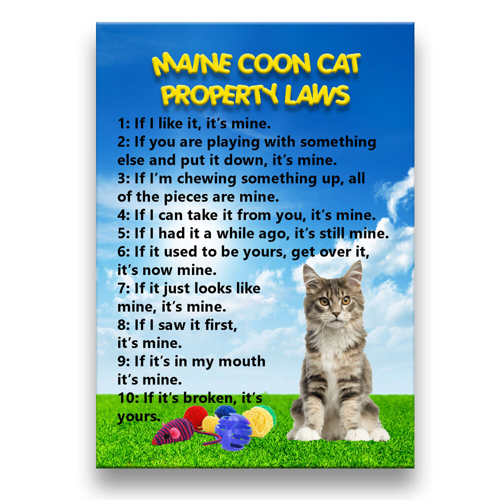 House Cat Laws