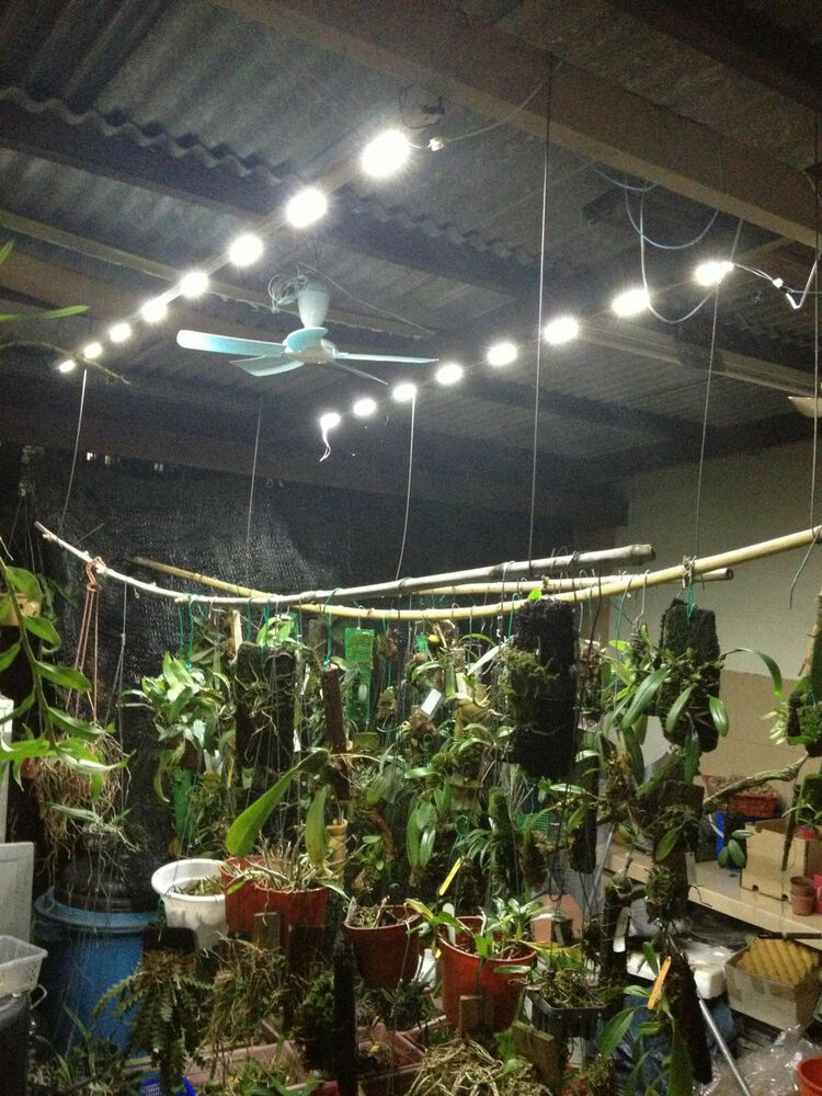 Orchid Collection Indoors Under Hid Hp Sodium Grow Light Irrigated Through Or Ebb And