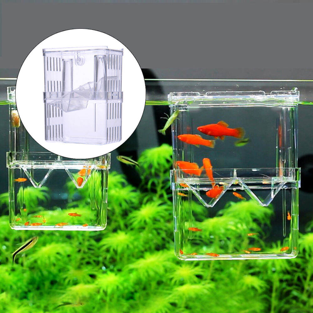 Pet aquarium fish tank guppy double breeding breeder for Aquarium fish trap