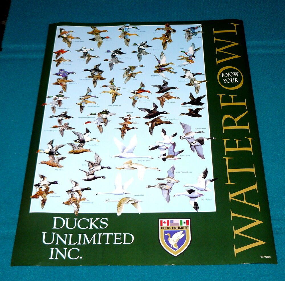 2002 Ducks Unlimited Quot Know Your Waterfowl Quot Poster Duck