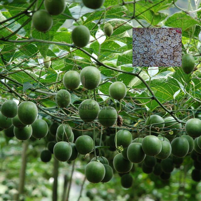 how to grow luo han guo
