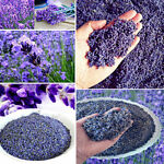 100g Organic Dried Lavender Buds Blooms Flowers Very Fresh Home Garden Decor HOT