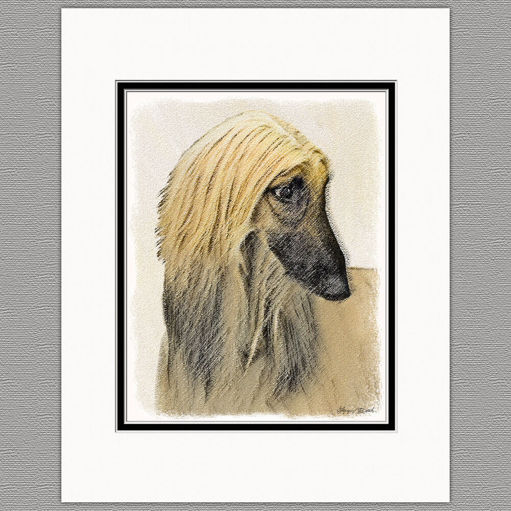Afghan Hound Dog Red Cream Original Art Print 8x10 Matted