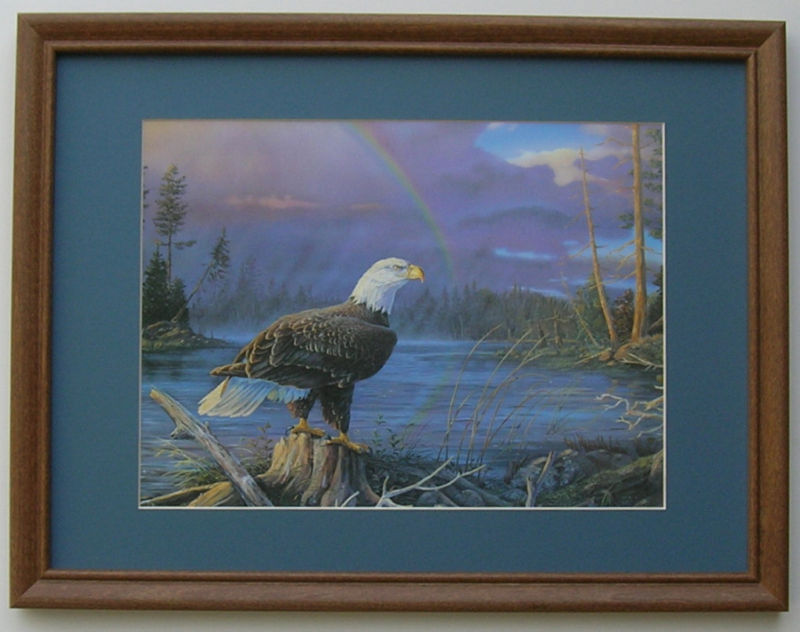 Eagles Pictures Birds Framed Country Picture Print Art