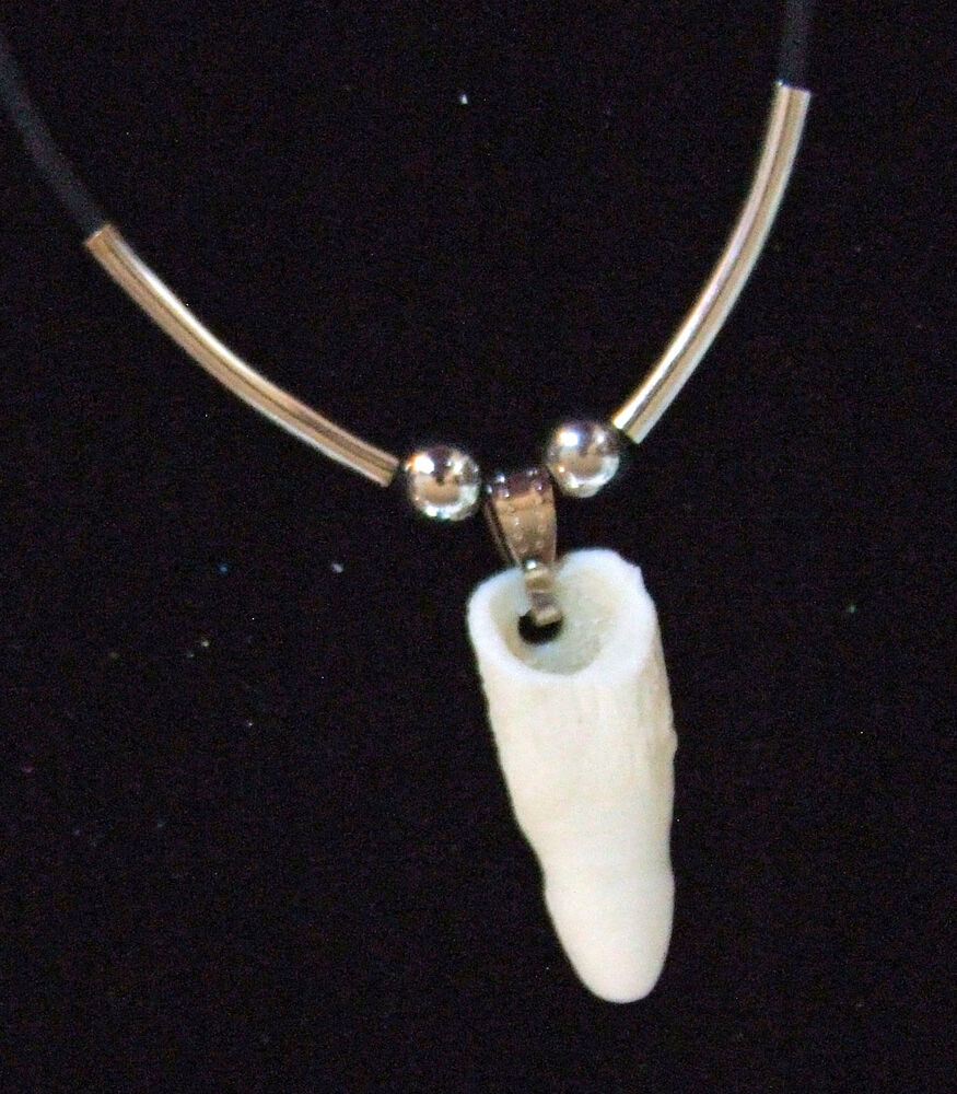 Crocodile Tooth Necklace: Alligator Tooth Necklace GT37 Swamp People Gator New