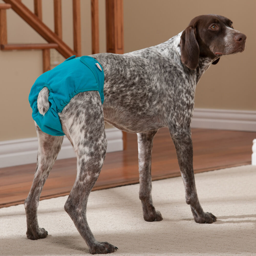 Where To Get Dog Diapers