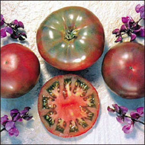 ORGANIC TOMATO PURPLE CHEROKEE 60 FINEST SEEDS